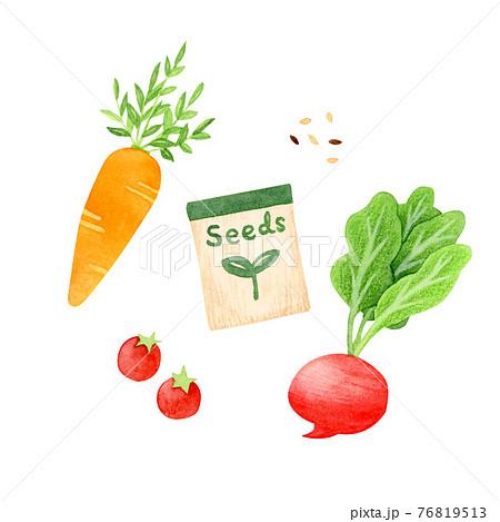 手描き水彩 種と野菜 イラスト 76819513