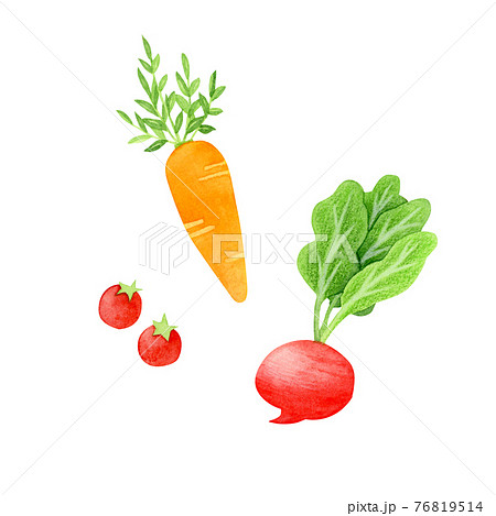 手描き水彩 野菜のイラスト 76819514