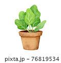 手描き水彩|鉢植えのイラスト 76819534