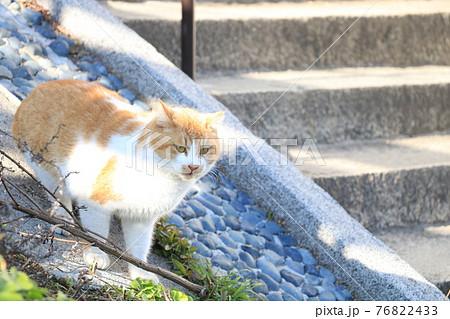 日向ぼっこする猫 76822433