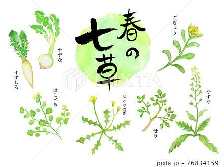 水彩で描いた春の七草のイラスト 76834159
