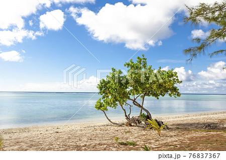 海と空と砂浜と樹木 サイパン 76837367