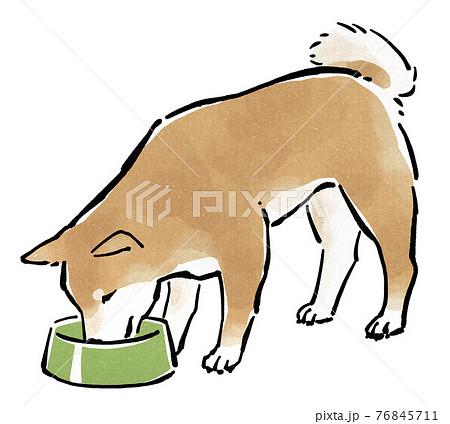餌皿からドッグフードを食べる柴犬 76845711