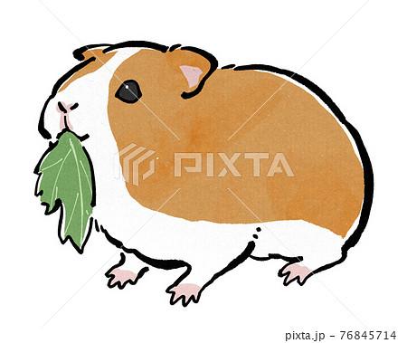葉っぱを食べる茶色のモルモット 76845714