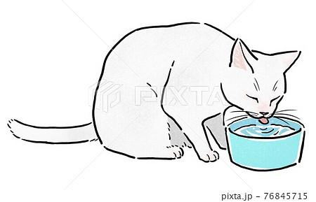 水入れから水を飲む白猫 76845715