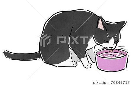 水入れから水を飲むハチワレ猫 76845717