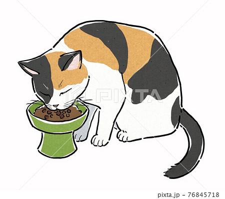 餌皿からキャットフードを食べる三毛猫 76845718