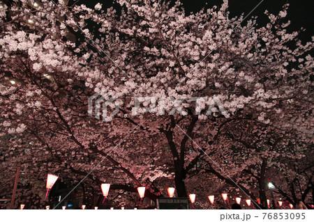 美しくライトアップされた目黒川沿いの桜 76853095