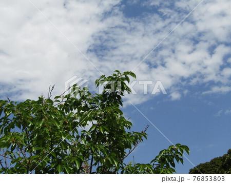 春の青い空と白い雲 76853803