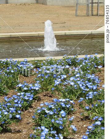 青色の花はネモフィラの花 76854335