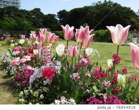 チューリップとビオラの花とルピナスの花 76854918