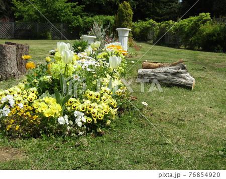 白いチューリップと黄色いビオラの花 76854920
