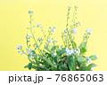小さくて青い花、黄色い紙の背景 76865063