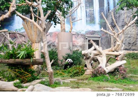 ジャイアントパンダのお食事タイム 76872699