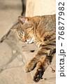 木製の腰掛けの上でうたた寝するネコ(ノラネコ/縦アングル) 76877982