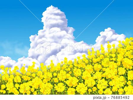 菜の花と入道雲 76885492