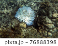 View of coral bleaching 76888398