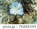 View of coral bleaching 76888399