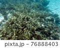 A view of coral reef in the sea 76888403