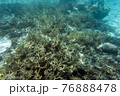 A view of coral reef in the sea 76888478