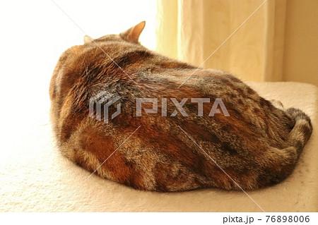 日向ぼっこで寝る美しい猫の背中アメリカンショートヘアシルバーパッチドタビー 76898006
