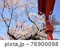 満開の桜とお寺の門 76900098