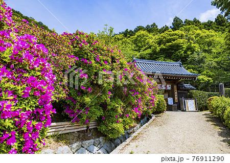 つつじ満開の関西花の寺 船宿寺 76911290