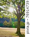 太陽に照らされる公園の緑樹 76914739