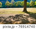 公園の地面に伸びる樹木の陰 76914740