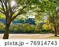 明るい太陽に照らされる公園の緑樹 76914743