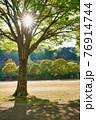 太陽に照らされる公園の樹木 76914744