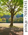 昼間の太陽に照らされて地面に影を落とす樹木 76914745