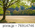 新緑の木々と昼間の公園 76914746