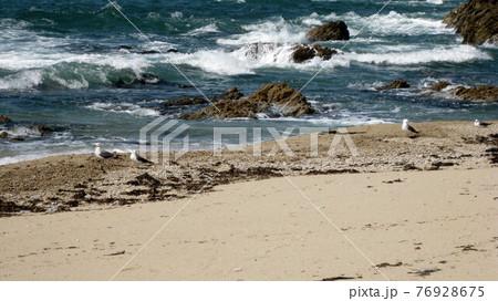 ウミネコのカップルと荒れる日本海の波打ち際 76928675