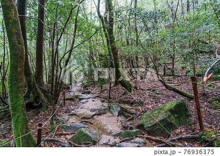 屋久島 白谷雲水峡の太鼓岩往復コース 76936375