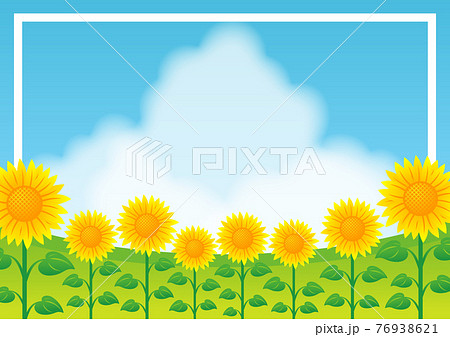 ひまわり畑のイラストイメージ 76938621