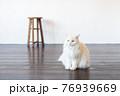 おすわりして真っ直ぐ前を見つめる白い猫 76939669