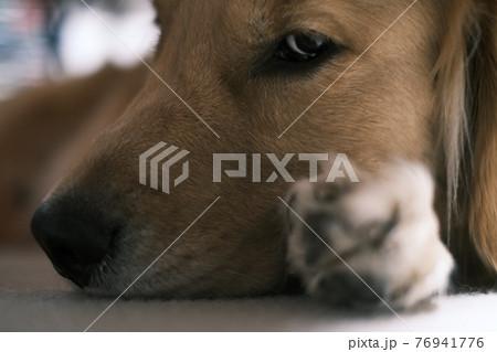 イケメン犬 76941776