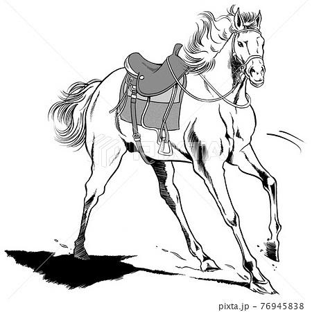 ウエスタン,鞍馬,馬,白馬 76945838