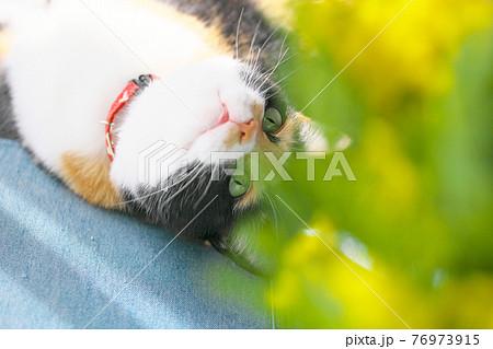 ミモザと猫 76973915