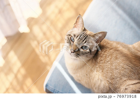 陽だまりの猫 76973918