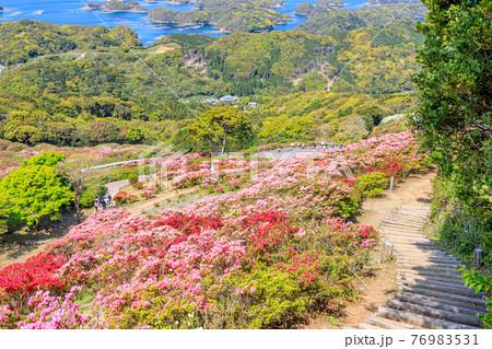 西海国立長串山公園のつつじ 長崎県佐世保市 76983531