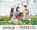 People working in greenhouse in garden center, coronavirus concept. 76988101