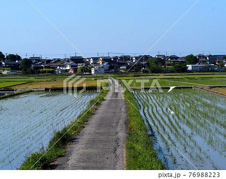 田植えの終わった水田と田んぼ道(春の香長平野 '21) 76988223