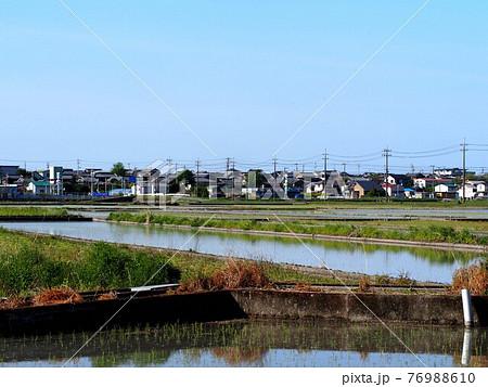 苗を植え終わった水田と海沿いの町(春の香長平野 '21) 76988610