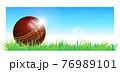 Cricket ball vector illustration 76989101