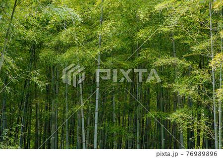 瑞々しい新緑の竹林 76989896