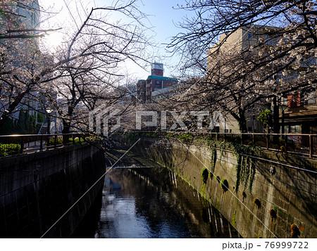 東京・目黒川の桜 76999722