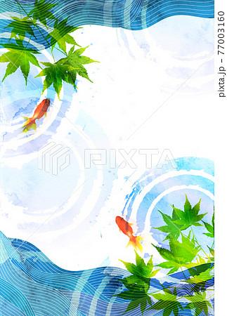 金魚 暑中見舞い 和柄 背景 77003160