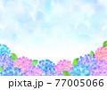 水彩 梅雨の紫陽花 背景フレーム 77005066